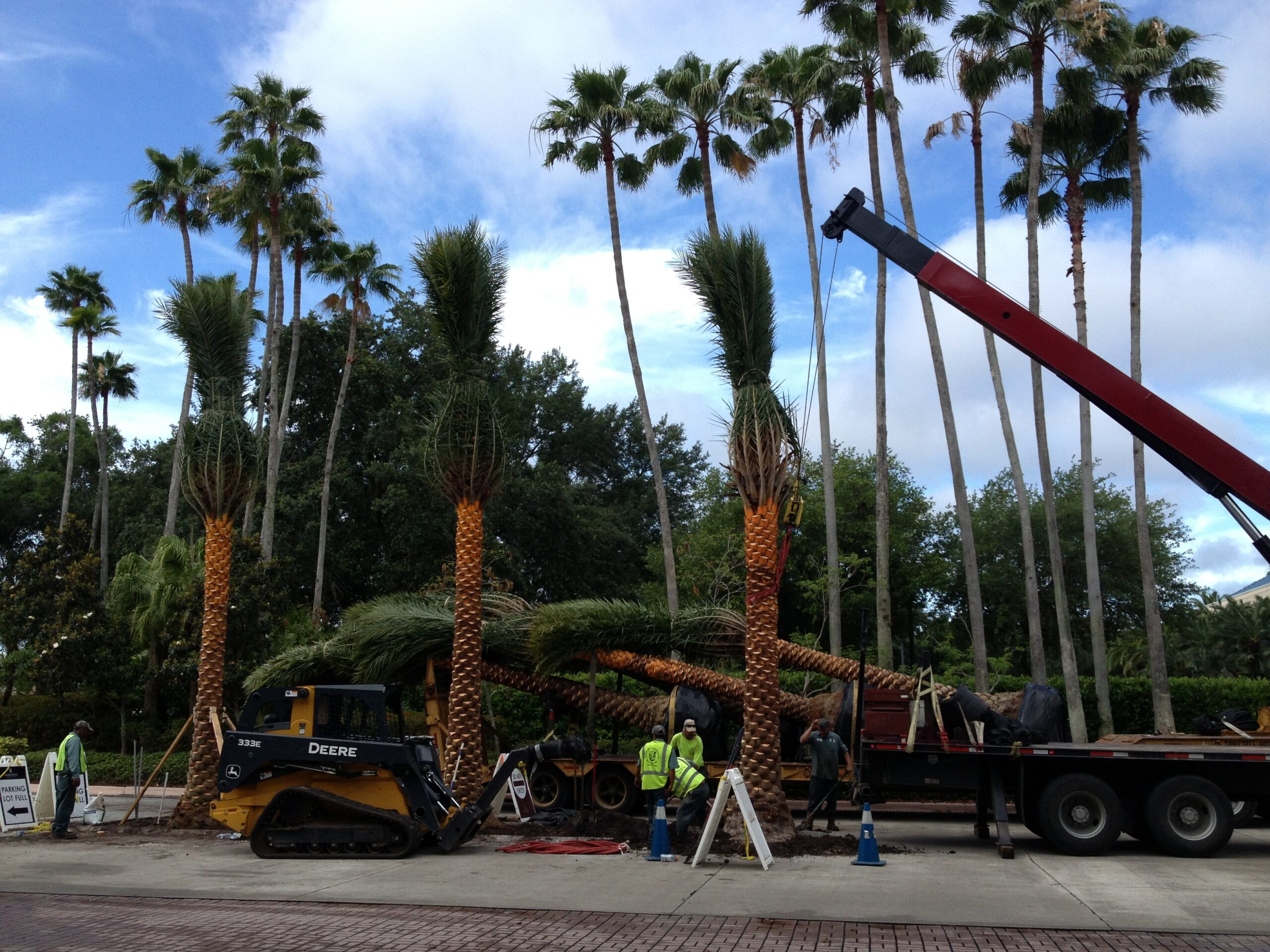 palm tree installation - commercial landscape - weber environmental services