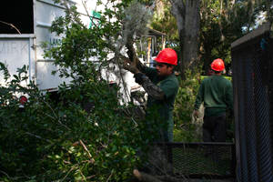 Arbor Care - Weber Environmental Services - tree care